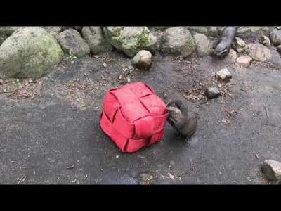 Video Zwergotter