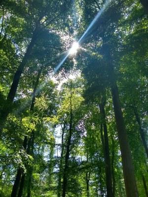 Achtsamkeit und Naturerfahrung